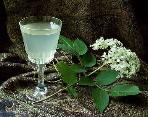 elderflower-champagne