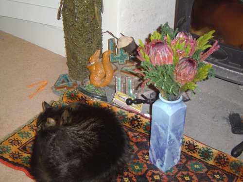 mands flowers matey blog
